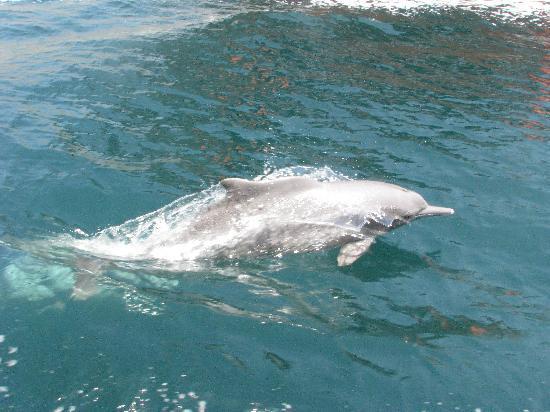 Oman Fjords: dolphin