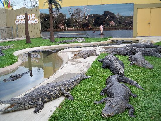 Reptile Gardens : crocodiles and alligators (yes, they have them in together)