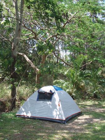 BIG4 Airlie Cove Resort & Caravan Park : quiet area to set up camp in