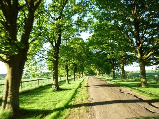 avenue of trees driveway to the farm picture of snowshill hill