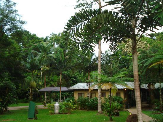Lync-Haven Rainforest Retreat, Cabins, Camping & Wildlife Experience: The Lodge
