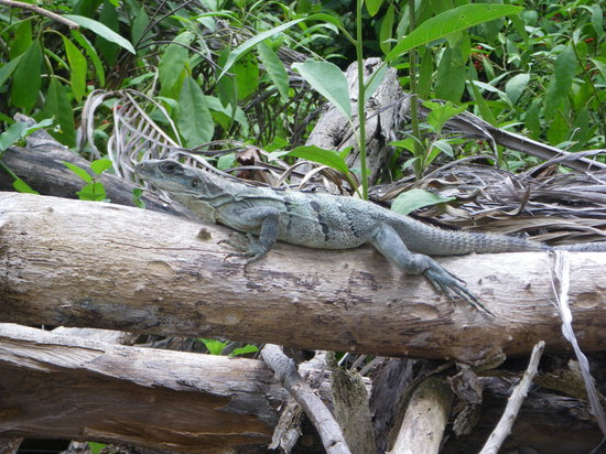 Cozumel, Mexico: Some wildlife to see