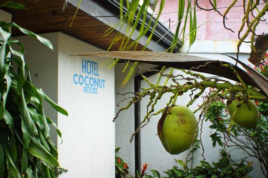 Hotel Coconut House: beautiful garden