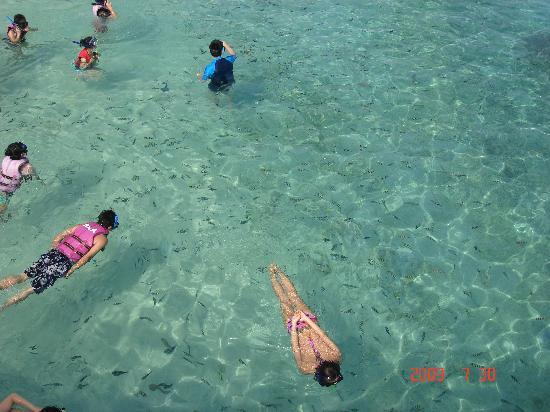 Pulau Redang, Malaysia: 魚、魚、魚、イッパイ