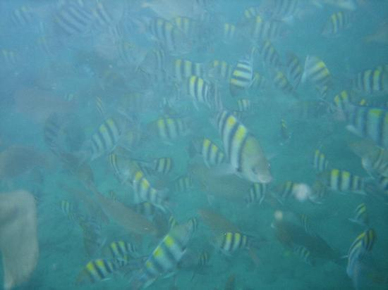 Portulano Dive Resort: school of fish at marine sanctuary
