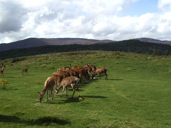 A Eilean A Cheo : Feeding time