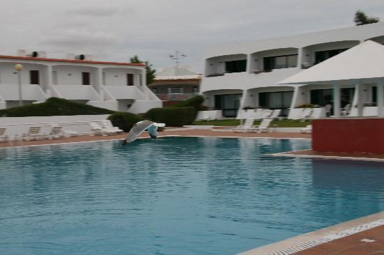 Quinta das Figueirinhas : Pool