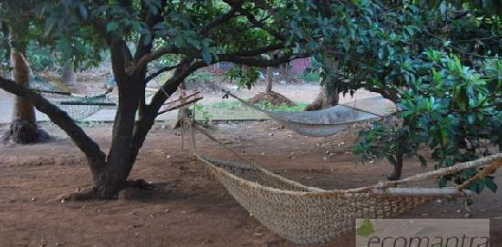 Ecomantra's Rivertrail Eco Camp : Hammocks at Rivertrail Eco Camp