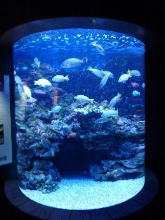 Maui Ocean Center: fish in tank