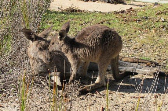 South Durras, Australien: Friends