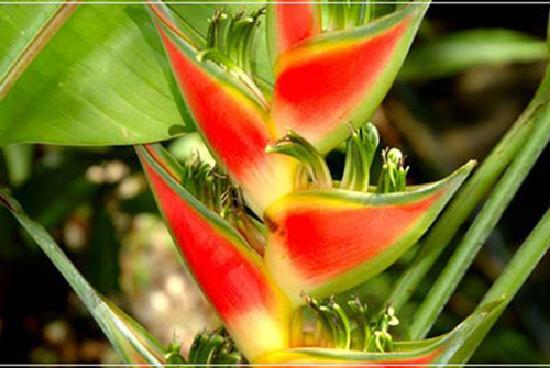 Buena Vista Luxury Villas: Flora