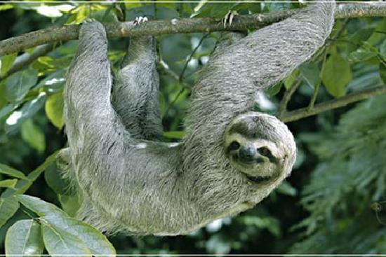 Buena Vista Luxury Villas: Sloth