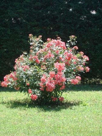 Relais La Corte dei Papi: Roses