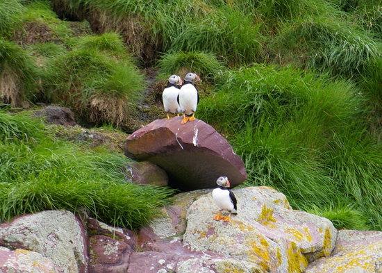 Witless Bay, Canadá: Puffins were the cutest of all the birds on the tour