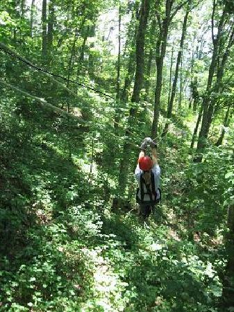 Navitat Canopy Adventures - Asheville Zipline: Zipping through the trees