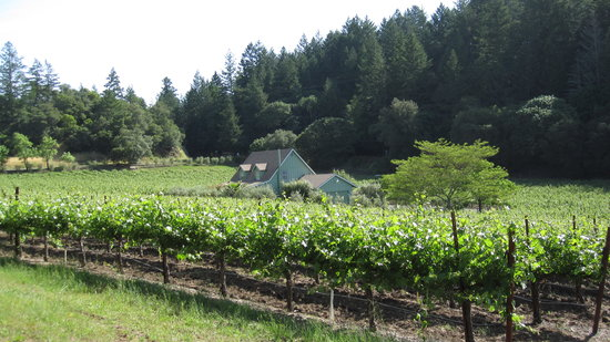 Chelsea Vineyards: Alternate view from gate.