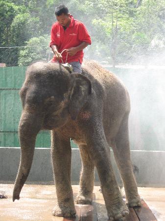 Sarang Galloway Bed & Breakfast: Elephants