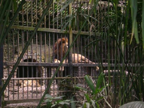 Simon Bolivar Parque Zoologico  y Jardin Botanico Nacional: Small Cage where the Lion and Lioness are living