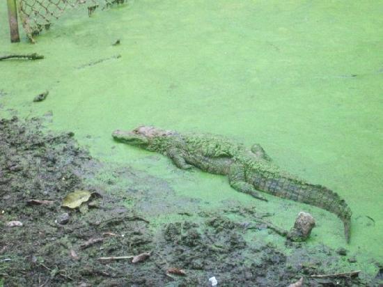 "Simon Bolivar Parque Zoologico  y Jardin Botanico Nacional: Contaminated water, where turtles and crocodiles ""swim"""