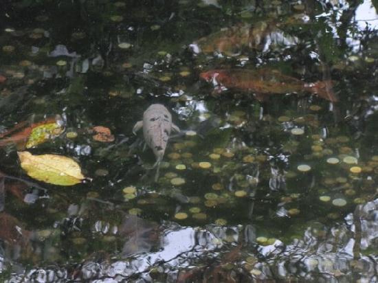 Simon Bolivar Parque Zoologico  y Jardin Botanico Nacional: People throw coins at the fish