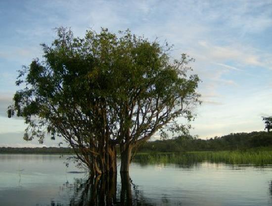 Amazon Gero Tours: Submerged tree