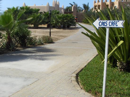 Kap Verde: la plage des chats
