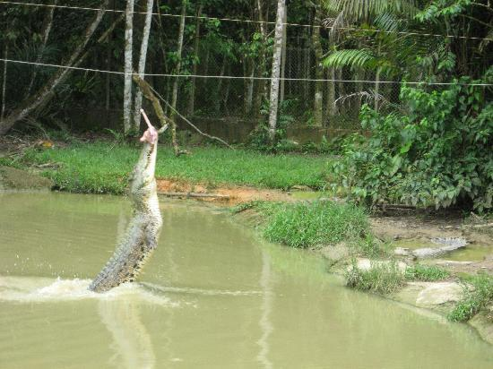 Batik Boutique Hotel: at the crocodile farm