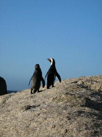 Boulders Beach Lodge: Penguins