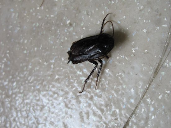 Duo Housing: dead bug