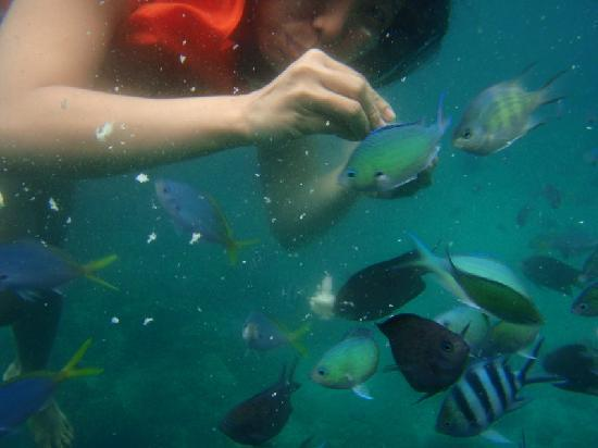 Coron, Filipinas: feeding the fish