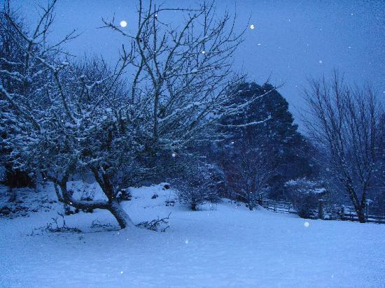 Fort William, UK: Ardochy House winter garden