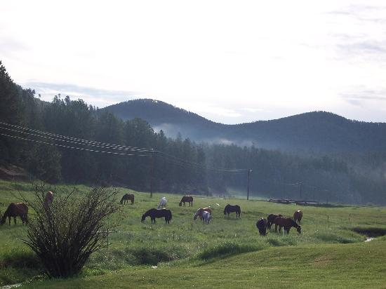 High Country Guest Ranch: Morning view from Trailside cabin