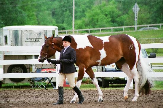 Wilderness Trails Ranch: horse show pinto paint