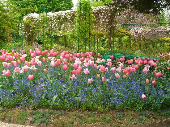 Giverny, Frankrijk: Tulips and forget me nots