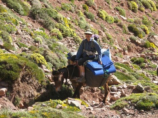 Azilal, Morocco: Sport muletier !