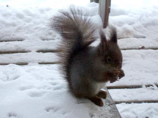 Hotel Jeris: L'écureuil au chalet