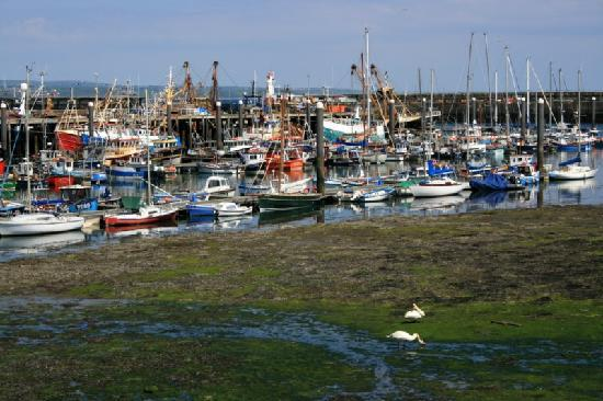 The Smugglers: Newlyn Harbour