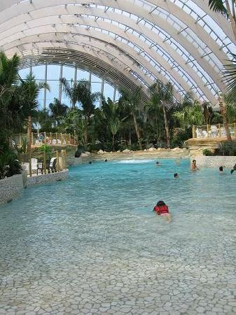 Biche juste devant notre cottage picture of center parcs for Piscine center parc sarrebourg