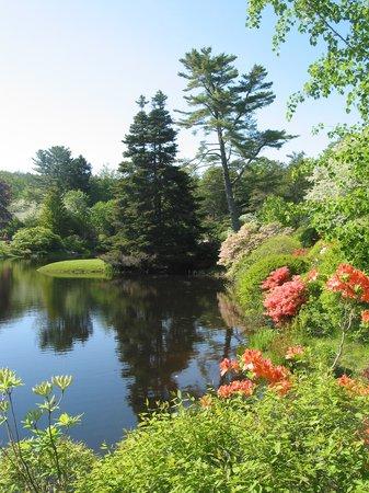 Bass Cottage Inn : Asticou Gardens--Acadia National Park