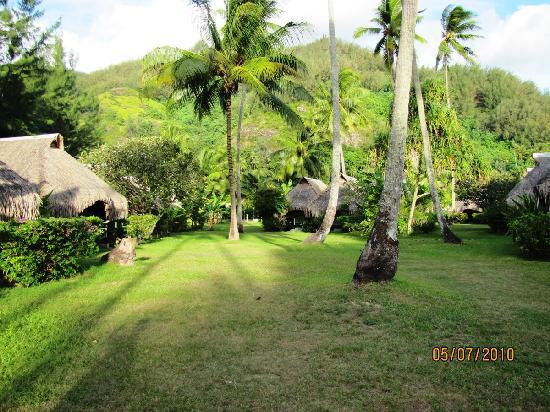 Hotel Hibiscus: Vista del parque