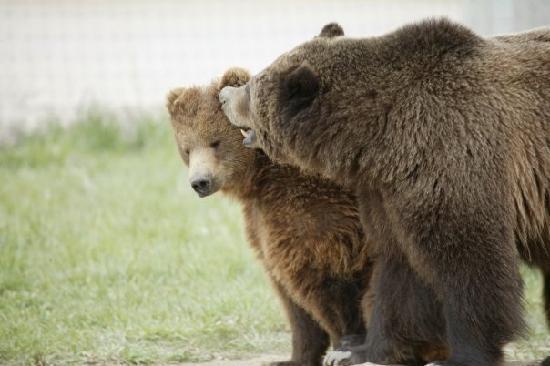 Keenesburg, CO: Bear kisses