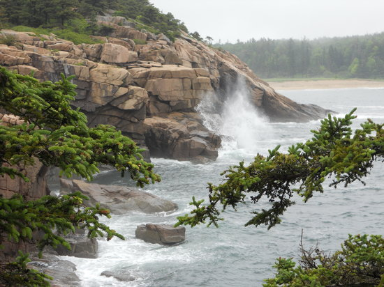 Manor House Inn : The scenery in Acadia is some of the best you will ever see