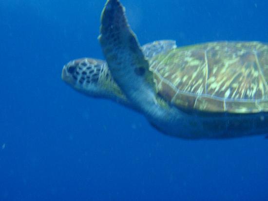 Phang Nga, Thailand: Schwimmen mit Schildkröten