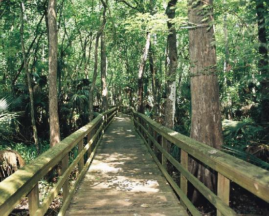 Sebring, FL: Highlands Hammock State Park