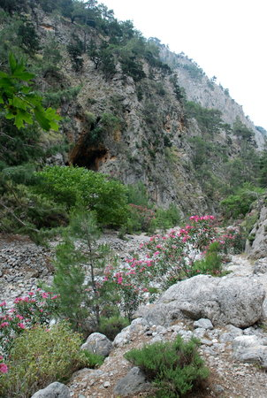 Sougia, Greece: River bed with flowers