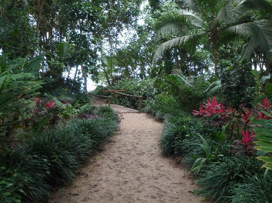 Casa Viva Beach Houses: path to punta uva beach from CV