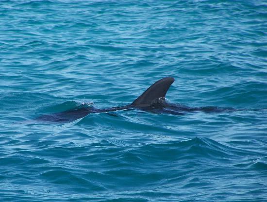 Sunny Days Catamarans : Dolphin playground