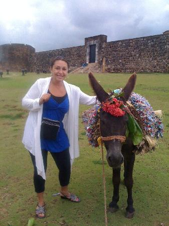Tropical Suites : the fort, the donkey and i
