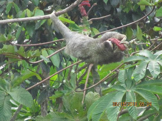 Red Frog Beach Island Resort & Spa: A sloth entertained us for hours right outside our villa!