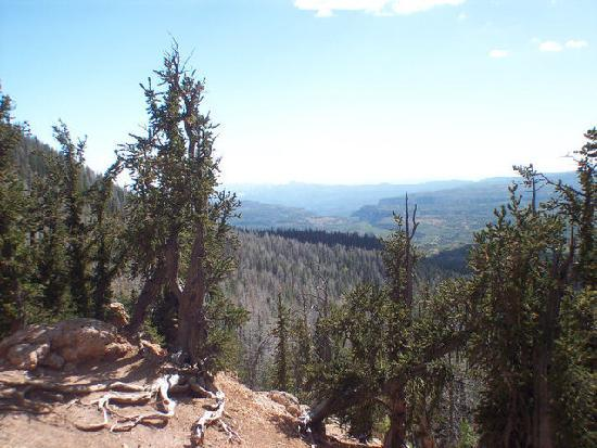 Cedar City, UT: Viewpoint at the end of Bristlecone Trail.